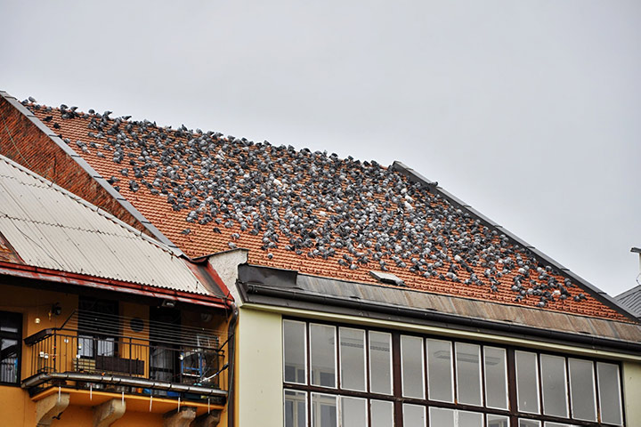 A2B Pest Control are able to install spikes to deter birds from roofs in South Harrow.