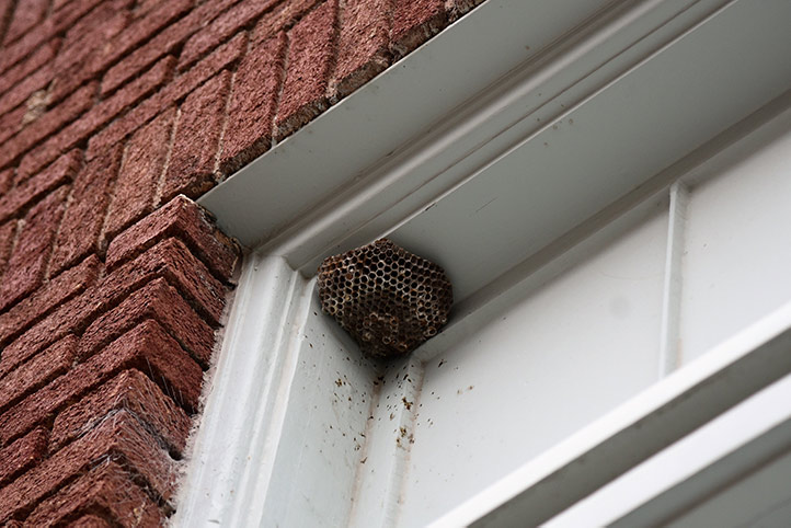 We provide a wasp nest removal service for domestic and commercial properties in South Harrow.